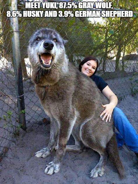 33 Happiest Dog Memes Ever That Will Make You Smile From Ear To Ear Dogmemesfunny Dogmemes Dog Memesdaily Meme Hond Memes Reusachtige Honden Hondenspullen