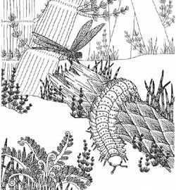 Free Printable Coloring Pages Of Fossils From Various Geologic
