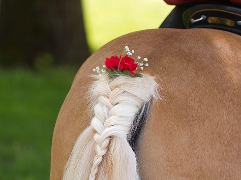 Am Haflinger Pferderennen in Meran - Schweifzopf mit Blumen
