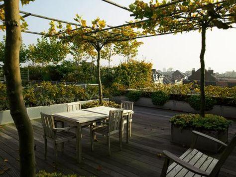 Dachterrasse gestalten Tipps für Pflanzen Wand \ Beet - gewurz gartengestaltung im restaurant segev