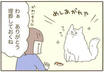 卵山玉子 実家猫の差し入れ 猫 猫 漫画 キュートな猫
