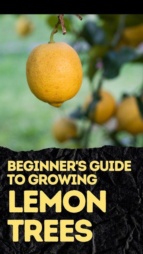 Beginner's Guide to Growing Lemon Trees