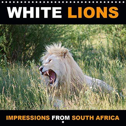 Lions kalender 2020