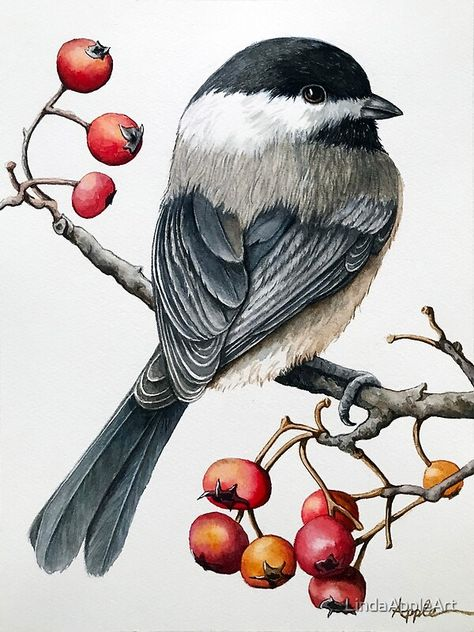 """Chickadee watercolor bird nature"" art by LindaAppleArt features a watercolor painting of a cut e chickadee perched on a branch with berries. Bird Paintings On Canvas, Watercolor Paintings, Canvas Art, Winter Illustration, Vintage Bird Illustration, Winter Drawings, Nature Artwork, Bird Drawings, Watercolor Bird"