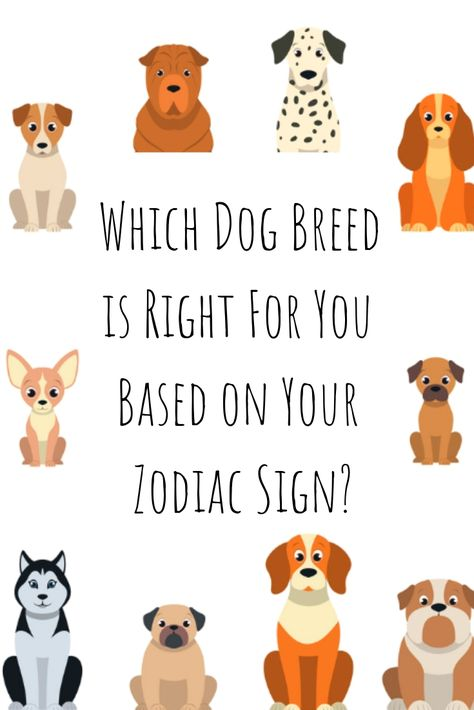 Which dog is right for you according to your zodiac sign! Here is a list of which dog breeds you are most compatible with according to your zodiac sign. The personality traits of dog breeds are different, so you should look into the traits of each dog breed before adopting a dog. Find out what type of dog breed you should get! #Dogbreed #Dogs #Zodiacsigns