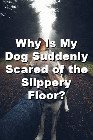 Dogs Park Informs Why Is My Dog Suddenly Scared Of The Slippery Floor In 2020 Dog Park Sleeping Dogs Your Dog