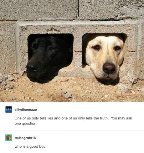 Tumblr Posts All About Animals Cute Funny Animals Funny Animals