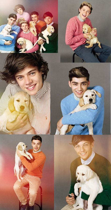CUTEST DOG WITH 1D | ... some time out of their busy schedule to take the cutest pictures EVER