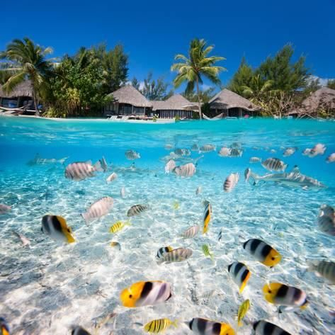 Thinking of a Tahiti holiday & not sure where to start? TravelOnline are the experts in planning, building and booking comprehensive holidays in Tahiti. We offer instant quotes, personalised booking services & up to off package deals. Beautiful Places To Travel, Romantic Travel, Beautiful Beaches, Dream Vacations, Vacation Spots, Unique Vacations, Nature Architecture, Tahiti French Polynesia, French Polynesia