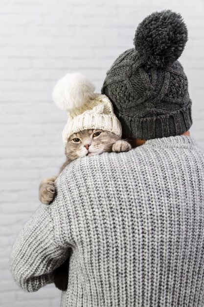 Download Male With Back Holding Cat With Fur Cap For Free In 2020 Cute Cat Cats Cute Cats