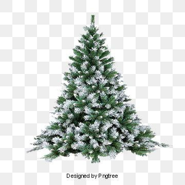 Pine Trees Snowy Tree Snow Branches Snow Png Transparent Clipart Image And Psd File For Free Download Tanaman