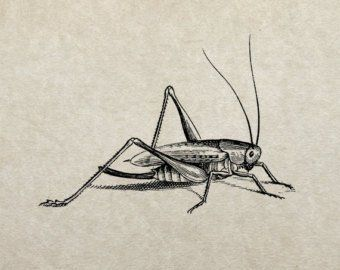 Cricket Insect Etsy Insect Tattoo Cricket Insect Flying Tattoo