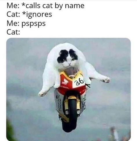 /r/Memes the original since 2008