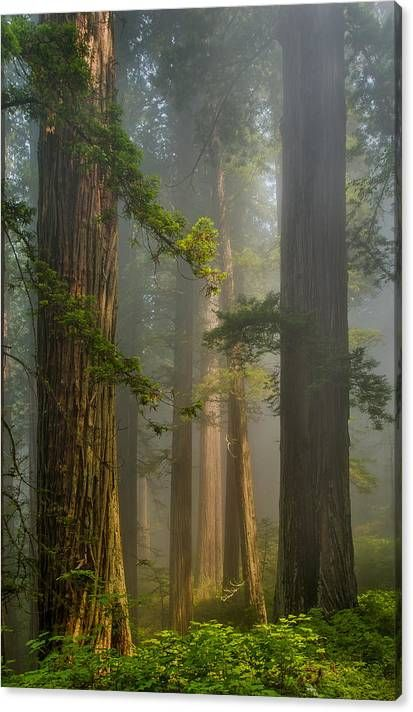 Center of Forest Canvas Print / Canvas Art by Greg Nyquist