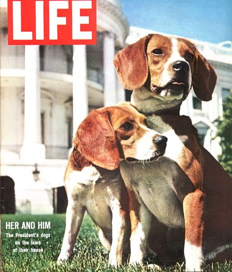 First Dogs Her And Him Term 1963 1969 Breed Beagle President
