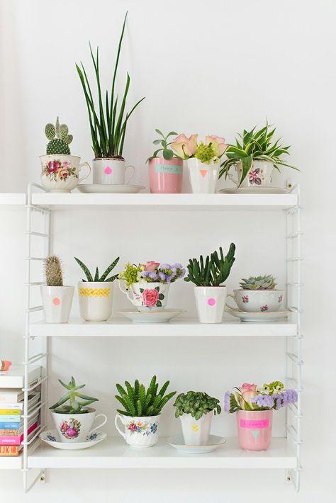 suculentas plantadas em xicaras de chá dispostas numa estante enfeitam de forma delicada