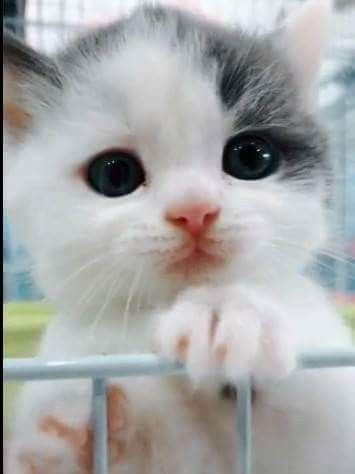 Awwww Kitten Nose Eyes Kittens Cutest Baby Cats Cute Cats