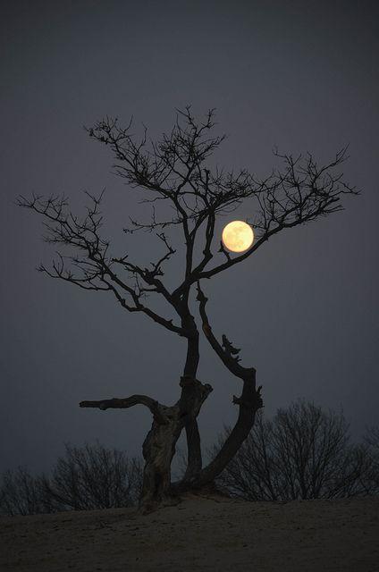 Look to la luna.