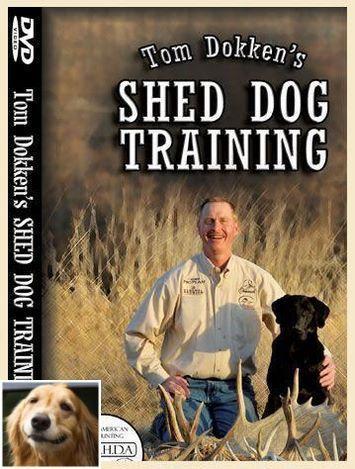 Easy Dog Training Tips Dogtrainingquebec 2560367930