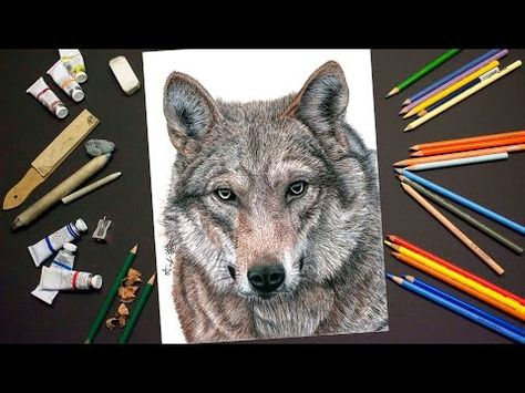 Drawing a WOLF - Realistic Time Lapse Drawing/Painting