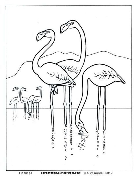 Flamingo coloring pages, flamingo colouring pages | Flamingo ...