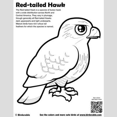 Falcon Bird Coloring Pages Bird Coloring Pages