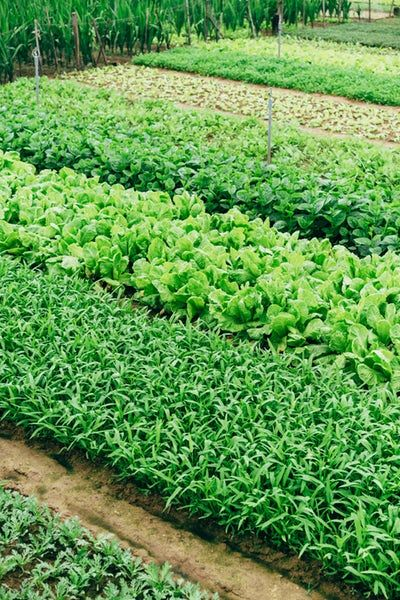 How Organic Farming Helps the Environment ~ Deliciously Savvy