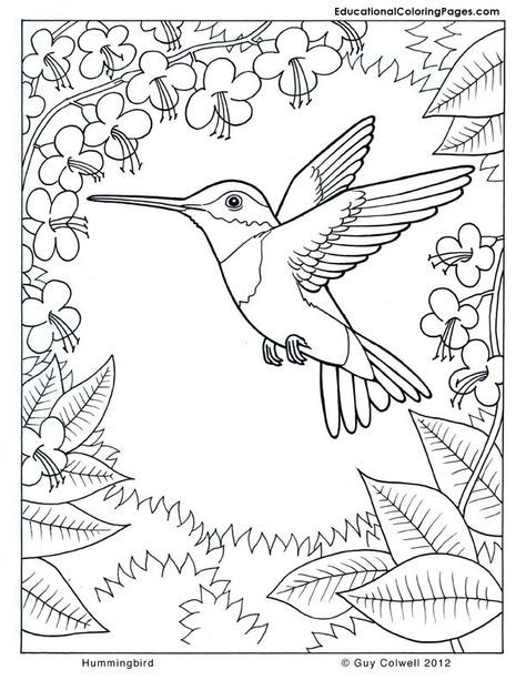 coloring pages hummingbirds | Hummingbird coloring, flower ...