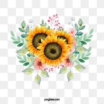 Girassol Girassol Clipart Bordas Decorativas Flores Imagem Png E Psd Para Download Gratuito Sunflower Clipart Sunflower Images Sunflower Png