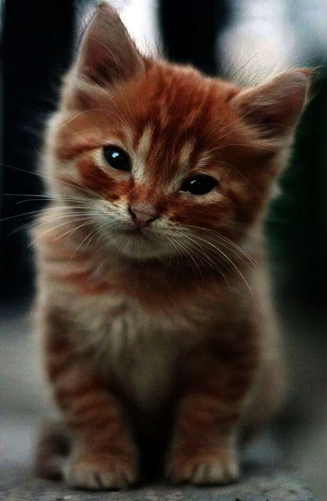 kitty kafe cats in heat manga online free