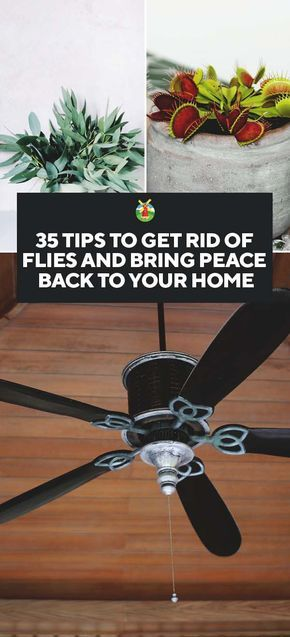 35 Ways to Get Rid of Flies and Bring Peace Back to Your ...