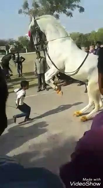 Beautiful Horse Dancing