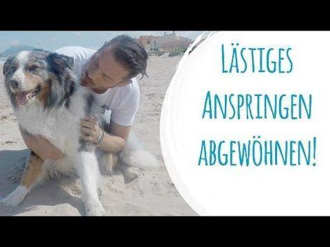 Hund Bild Von Binger Feger In 2020 Hunde Hundeerziehung Welpen