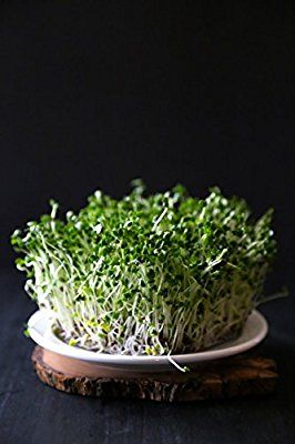 Amazon Com Certified Non Gmo Broccoli Seeds For Sprouting