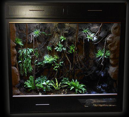 reptile terrariums - Google Search - 23 Best Reptile Tanks & Ideas Images On Pinterest Reptile Tanks