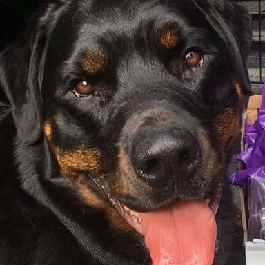 Pin By Rachel Ellis On Hetty Calm Dogs Assistance Dog Dog Friends