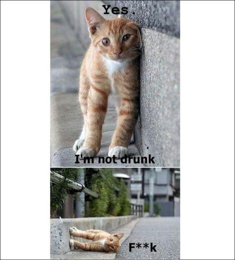 Borracho Katzen Lustige Spruche Lustige Haustiere Spruche Tiere