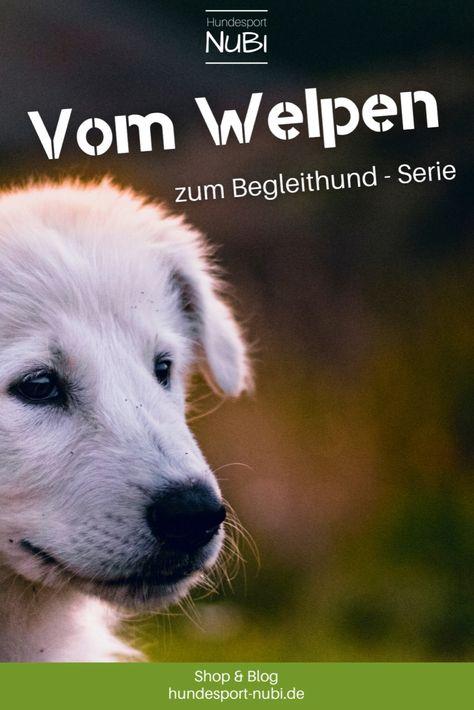 Begleite unsere Hündin Wollie auf ihrem Weg zur Begleithundeprüfung. Alle Artikel in der Übersicht. So trainieren wir: vom Welpen zum Begleithund! | Training, Hundetraining, Junghund, Hundeplatz, Hundeschule, Tipps und Tricks, Sport mit Hund, Leinenführigkeit, Fußlaufen, Unterordnung, Alltag, Leine, Leinenführigkeit, Sozialisierung, Welpen, Hundewelpe, Erziehung, Tiere, Haustier | Hundesport Nubi | www.hundesport-nubi.de