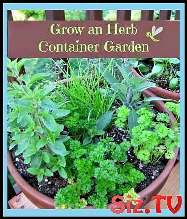 How To Grow An Herb Container Garden Growing Herbs In Pots Outdoors Porch Herb G Container In 2020 Herb Garden Pots Growing Herbs In Pots Vertical Herb Gardens