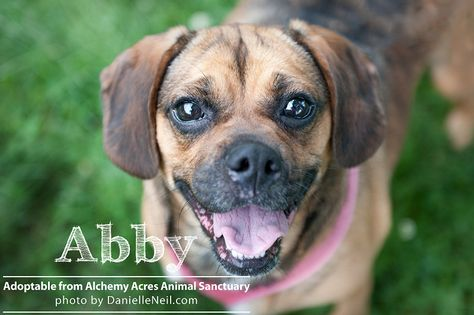 Alchemy Acres Dogs Cats For Adoption Ohio Pet Photographer Cat Adoption Pet Photographer Dogs