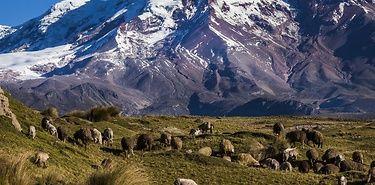 Equateur A La Poursuite Des Reves Equateur Voyage Amerique Du Sud Amerique Du Sud