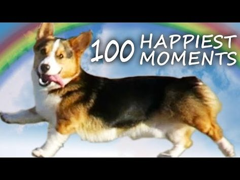 A Dog S Life Corgi Puppy S 100 Happiest Moments Youtube Corgi