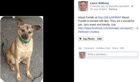 Facebook App Save A Pet By Sharing Its Photo Pets Facebook Users Pictures Online