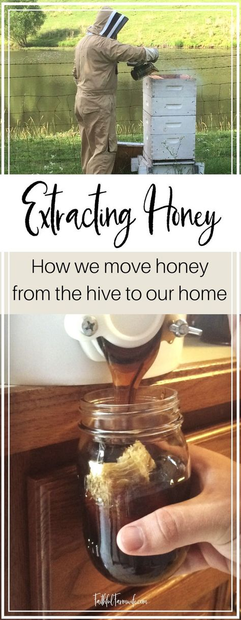 Interested in beekeeping or just love eating honey? Find out how beekeepers extract honey to move it from the hive to your home! Harvesting Honey, Rainwater Harvesting, Bee Hive Plans, Beekeeping For Beginners, Raising Bees, Backyard Beekeeping, Worm Composting, Annual Plants, Bee Happy
