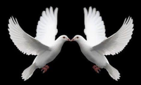 Hasil Gambar Untuk Burung Merpati Putih Merpati Burung Gambar