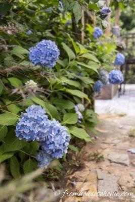 Wunderschone Pflanzen Die Im Schatten Wachsen Gartenarbeit Von Haus Zu Haus Pflanzen Stauden Sonnenpflanzen
