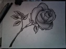 Image Result For Simple Pencil Drawings Of Roses Pencil Drawings Of Flowers Flower Sketches Pencil Sketch Images