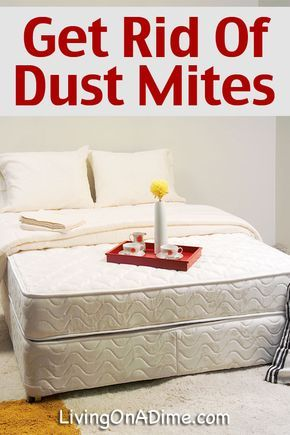How To Get Rid Of Dust Mites Living On A Dime To Grow Rich Dust Mites Dust Mite Allergy Bed Bugs Treatment