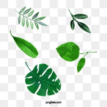 Watercolor Leaves Png Images Vector And Psd Files Free Download On Pngtree