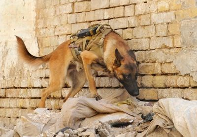 About military working dog adoptions